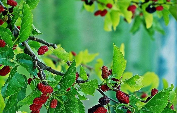 Những loại cây không nên trồng trước nhà để tránh tai họa