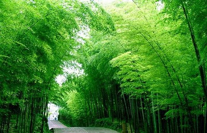 Những loại cây nên trồng trước nhà để mời gọi tài lộc