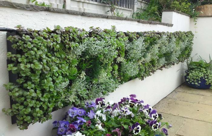 Sân nhà thích hợp trồng những loài thực vật nào?