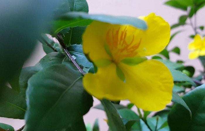 Tìm hiểu về 4 loại cây tứ quý