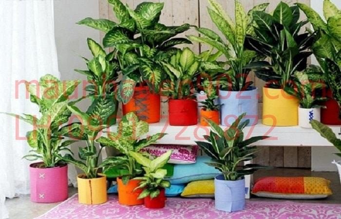 Tuổi Bính Thìn nên trồng cây gì trong nhà để mang lại tài lộc và may mắn nửa cuối 2018